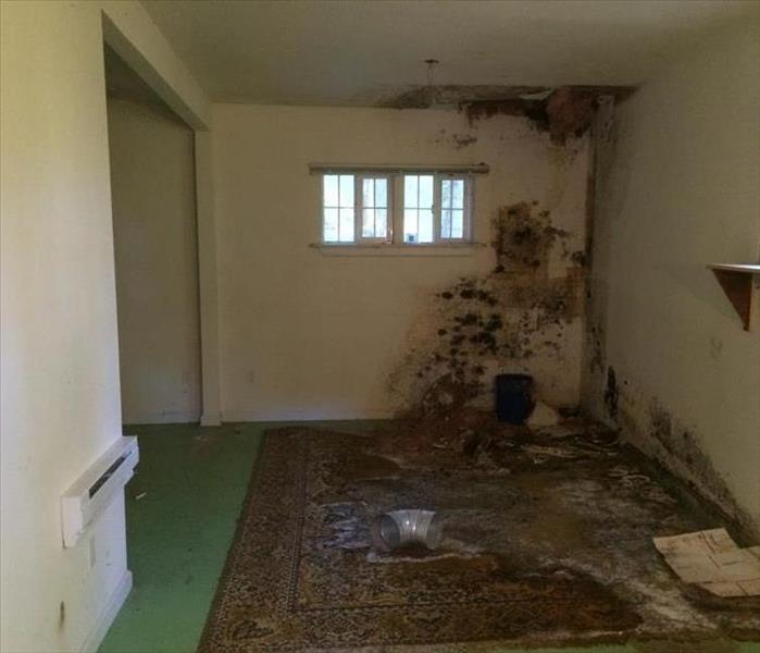 Mold Removal in Albany Oregon