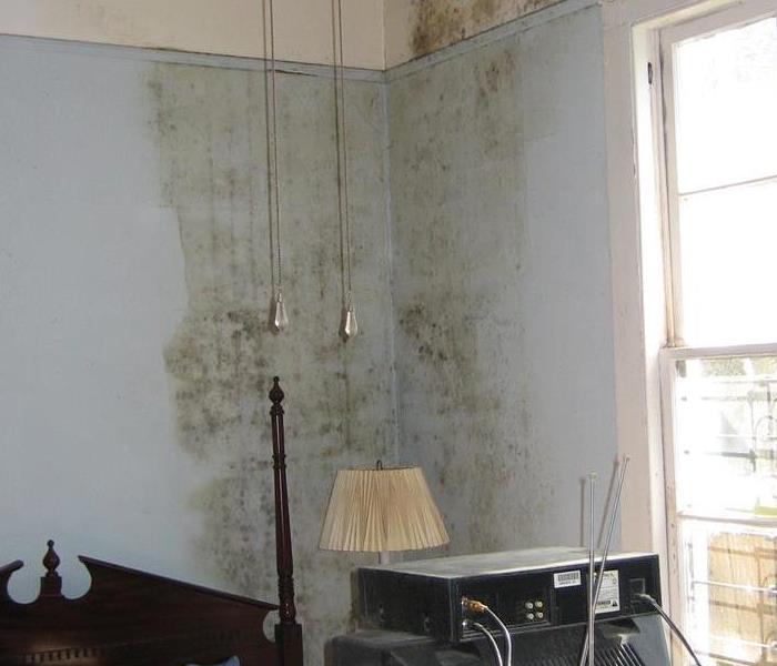 Mold Remediation Drying your home after a water loss, and why is important.